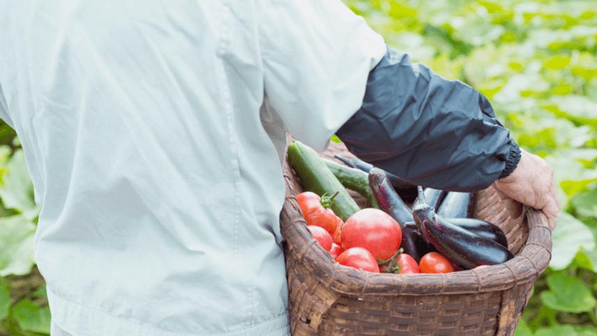 多様で新鮮な食材と素材の味わいを活用